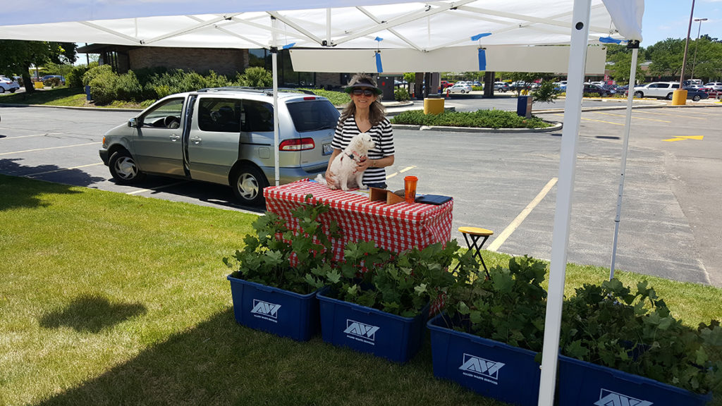Sandy and her puppy Callie giving away sugar maple trees at US Bank, Naper & 75th St Branch, Naperville, IL