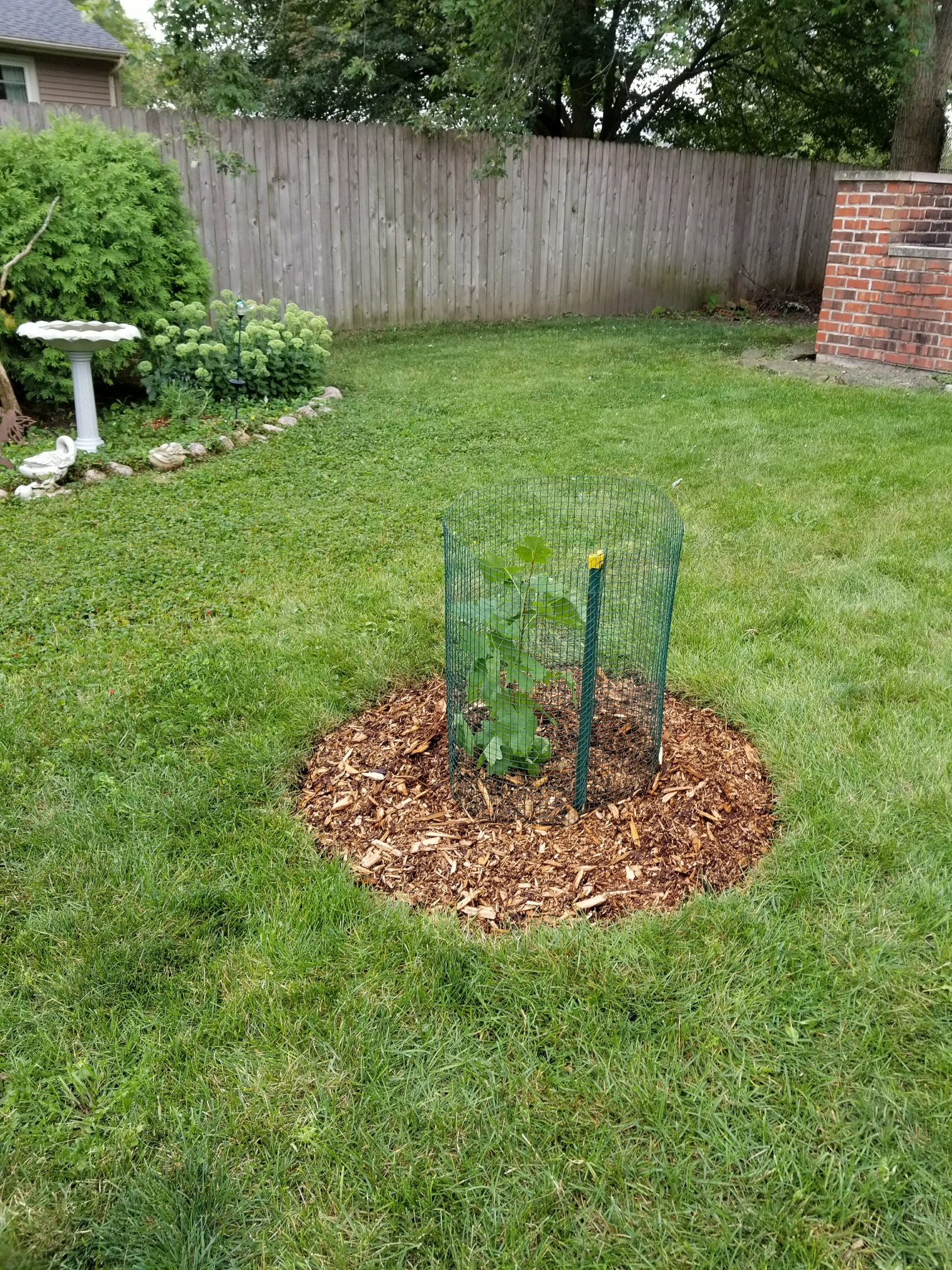 We received the seedling on Saturday at the Veggie Fest and planted it the next day on Sunday. We planted it in our back yard in Naperville. We put chicken wire around it to protect it from the rabbits. ☺ Thank you! Lori