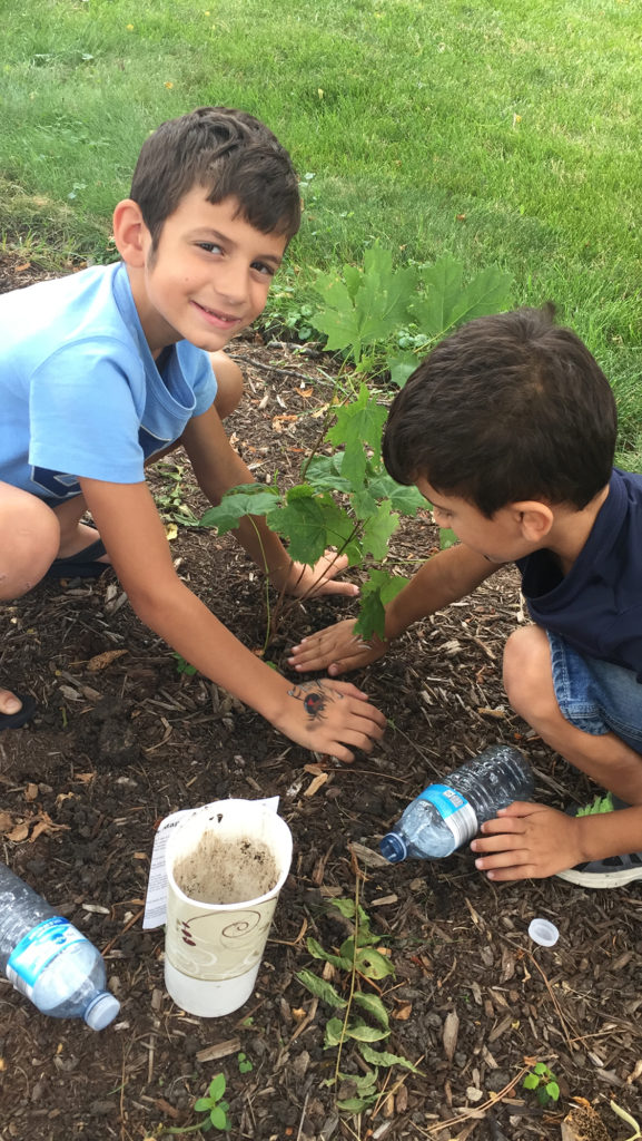 Hi Sandy, We planted the maple tree the second we came home The kids couldn't wait and they are checking up on it everyday and watering it every other day Thanks a lot for teaching my kids to love the environment Have a lovely day Randa